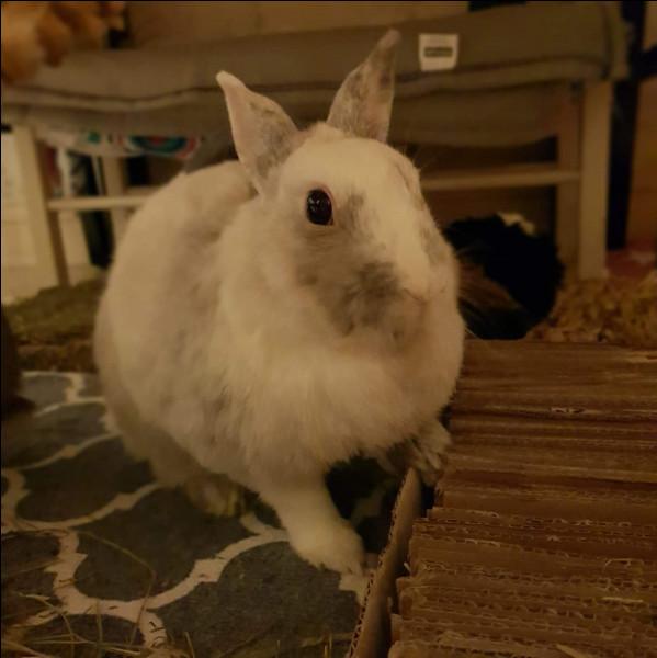Le lapin exprime sa curiosité en :