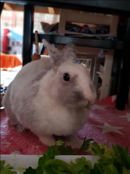 Un lapin qui vous lèche signifie qu' :