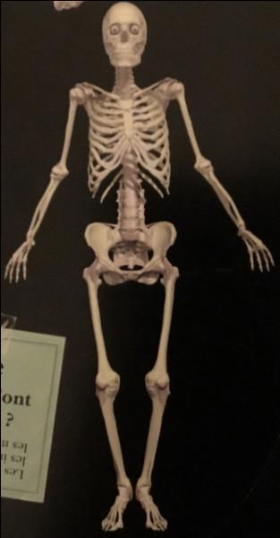Combien avons-nous d'os dans notre corps ,