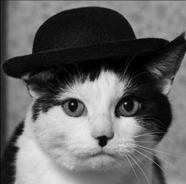 À qui ressemble ce chat ?