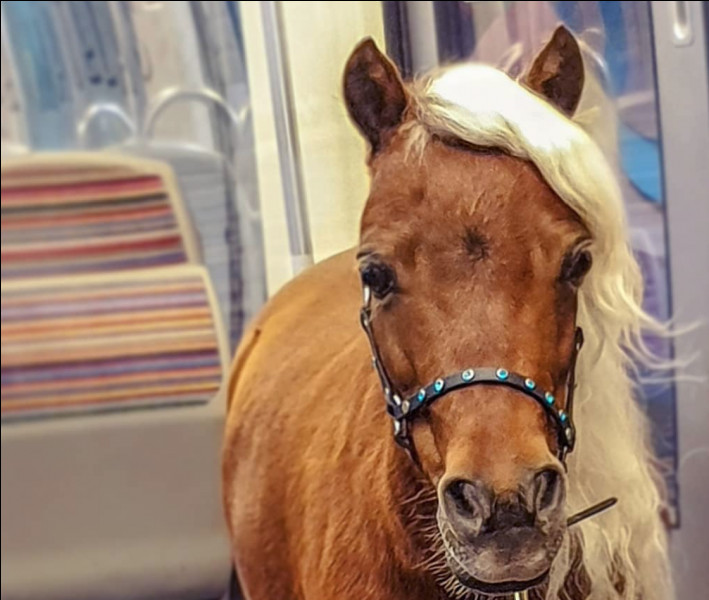 Les chevaux et les poneys sont de la famille des...