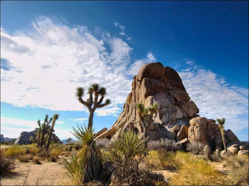 Sur quel continent trouve-t-on le désert de Mojave ?