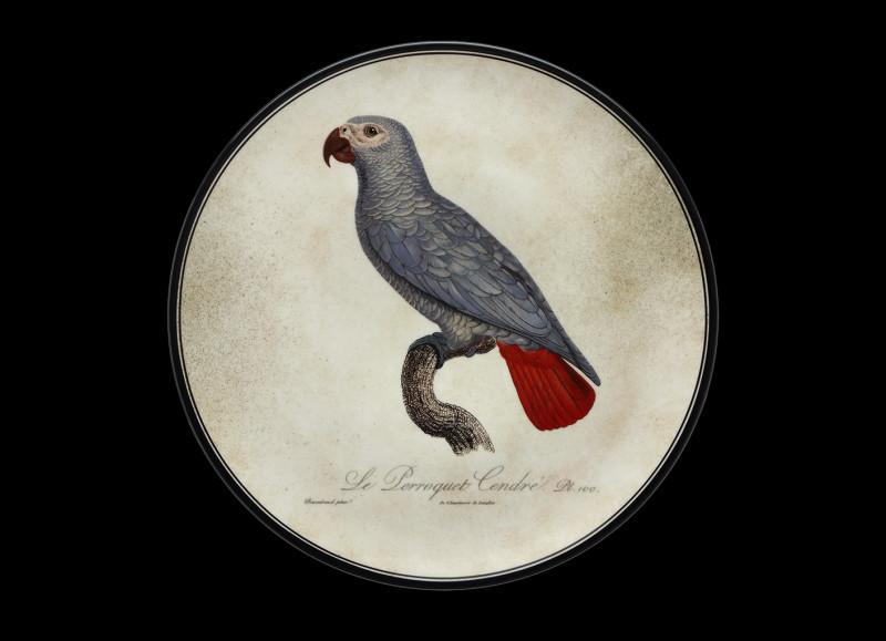 Combien de mots le perroquet gris du Gabon peut-il dire ?