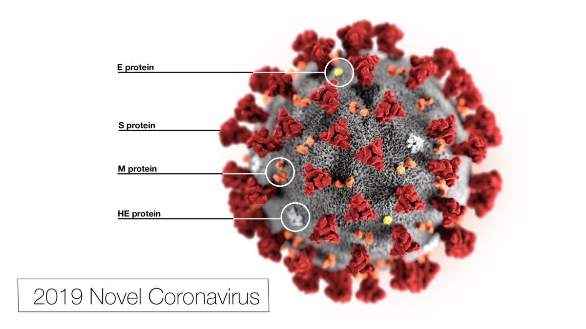 Coronavirus, gestes et questions
