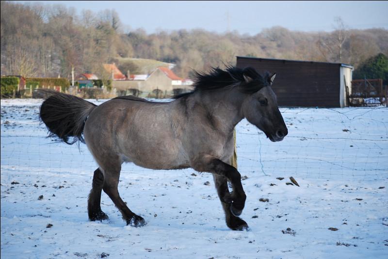 Ce cheval a la robe :