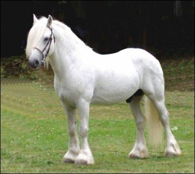 Le cheval sur l'image est un...