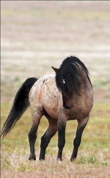 Je suis un beau cheval, n'est-ce pas ? Savez-vous quelle est ma robe ?