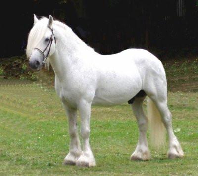 Les races des chevaux, les obstacles et les figures de manège