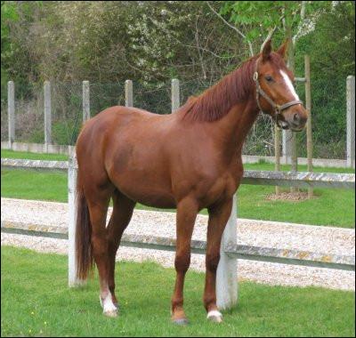 Quelle est la robe (couleur) du cheval sur la photo ?