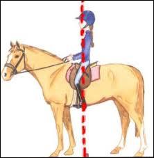 Comment doit être la position du cavalier à cheval ?