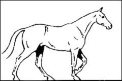 Quelle est l'allure du cheval sur la photo ?