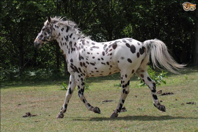 Quelle est la robe du cheval sur la photo ?