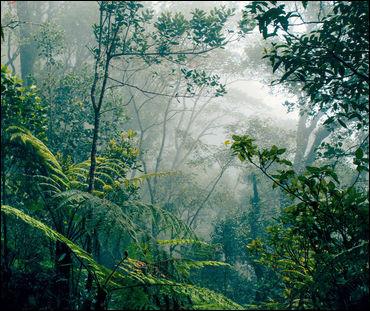 Comment appelle-t-on cette forêt au Brésil qui est déforestée ?