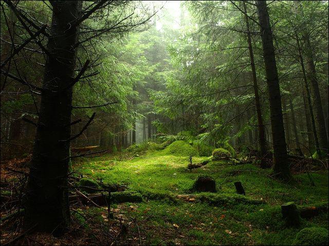 Quelle est la principale raison de la destruction de cette forêt ?