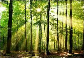 Quel est le pourcentage de la surface terrestre qu'occupe cette forêt ?