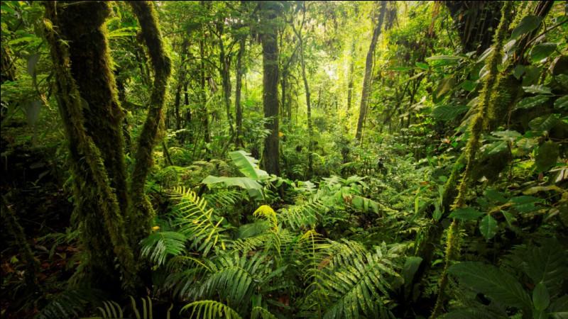 Par rapport à l'année dernière, comment a évolué la déforestation de cette forêt ?