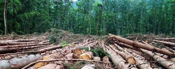 Nature et écologie : la déforestation