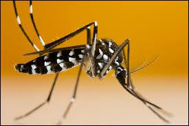 Sur combien de pays le moustique-tigre est-il présent ?