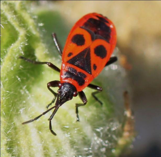 Je suis un insecte, vrai ou faux