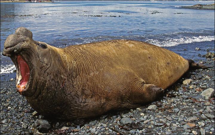 Quel est le nom de ce mammifère marin ?