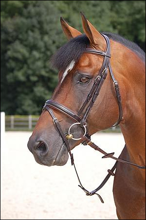 Sur une muserolle combinée, comment s'appelle la fine courroie plate servant à limiter l'ouverture de la bouche du cheval ?