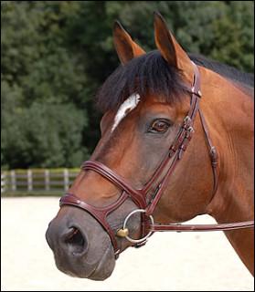 Un peu moins courante, on la rencontre surtout chez les chevaux de saut, comment s'appelle cette muserolle ?