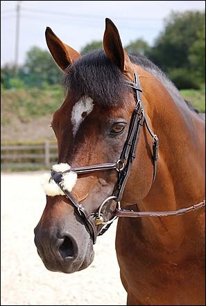 Sur une muserolle croisée, comment s'appelle le rond synthétique ou en mouton que l'on met pour protéger son cheval ?