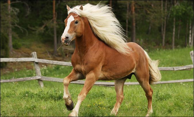 Tu aimerais que ton cheval ou poney ait une allure :