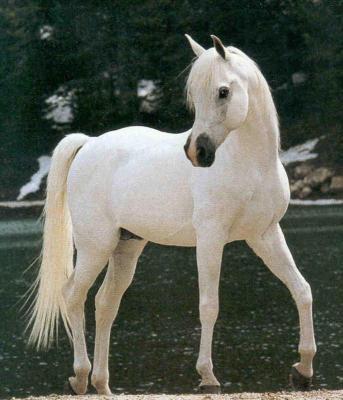 Quelle race de chevaux te correspond ? 2