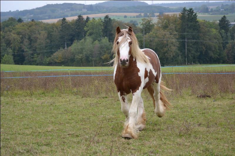 """Bien que le cheval en ait de nombreuses, il y a ... allures qu'il pratique avec aise, elles sont dites """"naturelles""""."""