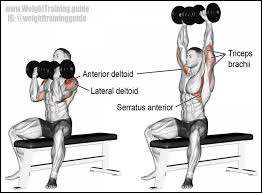Comment s'appelle ce geste de musculation ?
