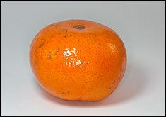 Quel est cet agrume proche de la mandarine, originaire du sud des États-Unis à l'épiderme rouge ?