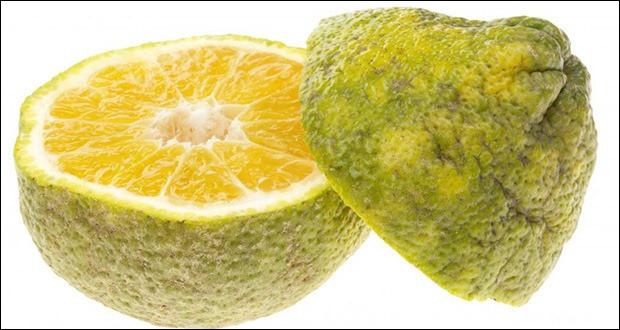 Quel est cet agrume originaire de la Jamaïque provenant de l'hybridation d'un oranger et d'un pamplemoussier ?