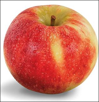 Quelle est cette variété de pomme rouge à tâches jaunes dont la chair blanche est sucrée et croquante ?