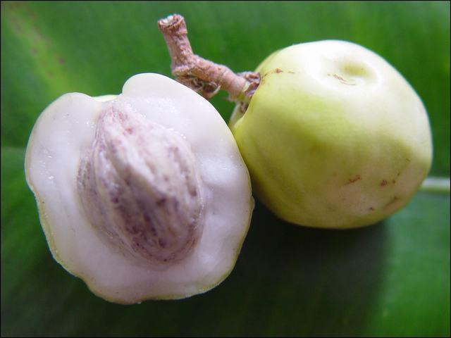 Quel est ce petit fruit tropical de la forme d'une prune dont la pulpe blanche a une saveur acre ?