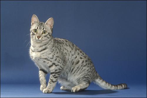 Comment s'appelaient les chats dans l'Égypte antique ?