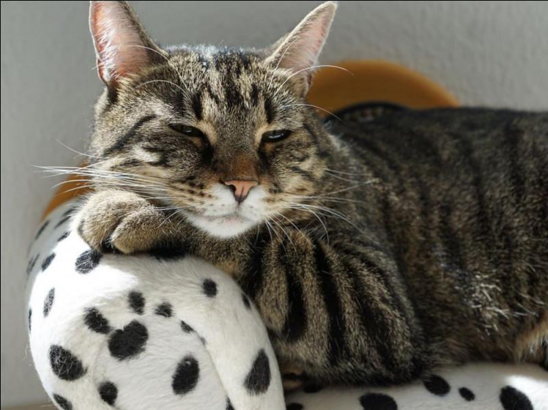 À combien de degrés un chat peut-il faire tourner ses oreilles ?