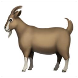 La chèvre, ou goat en anglais, dont les initiales signifient Greatest Of All Time, est attribuée à...