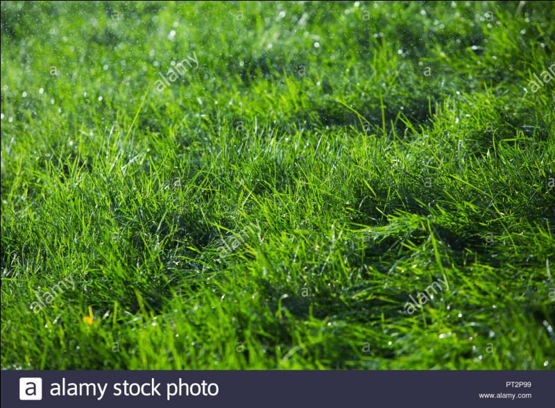 Quelle petite créature, dans un conte pour enfants, était verte et courait dans l'herbe ?