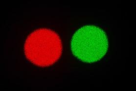 Le rouge ou le vert
