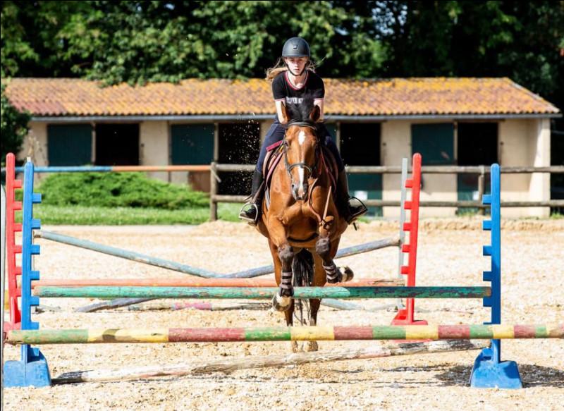 On dit que le cheval panache quand il refuse un obstacle.