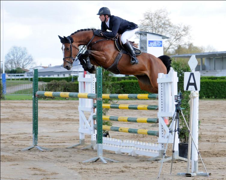 """Le duo que forment cavalier et cheval est nommé """"couple""""."""