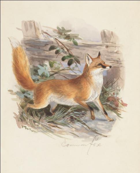 Quel était l'ancien mot français désignant le renard ?