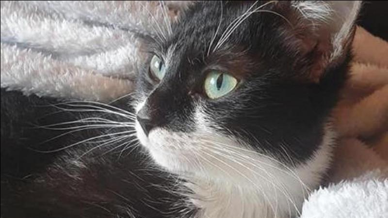 L'âge de maturité d'un chat est de 18 ans.