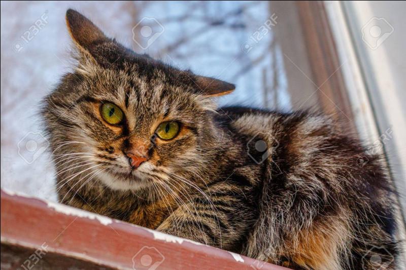 Le record d'âge d'un chat est de 21/22 ans.