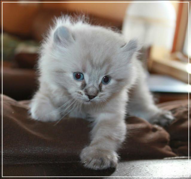 Le petit du chat s'appelle le chaton.