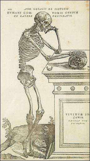 La véritable révolution eut lieu au XVIe siècle avec André Vésale. Issu d'une famille de médecins, il s'exerce à la dissection dès l'adolescence en dérobant les corps de suppliciés et relève les erreurs de Galien. Il publie en 1543 un traité, qui sera à l'origine de toute l'anatomie moderne. Quel est son nom ?