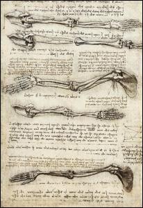 La collaboration des anatomistes avec les artistes de l'époque va permettre un gain en précision et en qualité dans les représentations anatomiques du corps humain. Quel célèbre peintre et inventeur est l'auteur de celle-ci ?