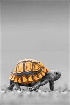 Dans une fable de La Fontaine, avec qui la tortue s'envole-t-elle ?