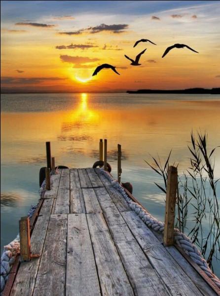 """Dans la chanson """"Le Chasseur"""" de Michel Delpech, quels oiseaux ne voit-il pas voler ?"""
